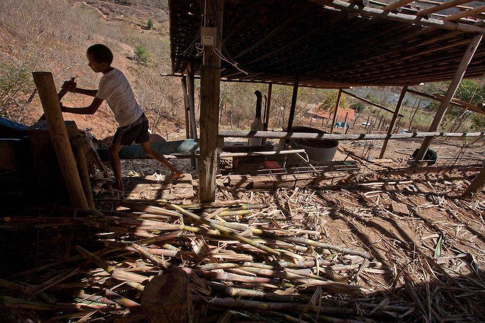 Minas Novas_MG, Brasil.<br /> <br /> Engenho de cana de acucar em Ouro Verde de Minas, Minas Gerais.<br /> <br /> Plantation of sugar cane in Ouro Verde de Minas, Minas Gerais.<br /> <br /> Foto: LEO DRUMOND / NITRO