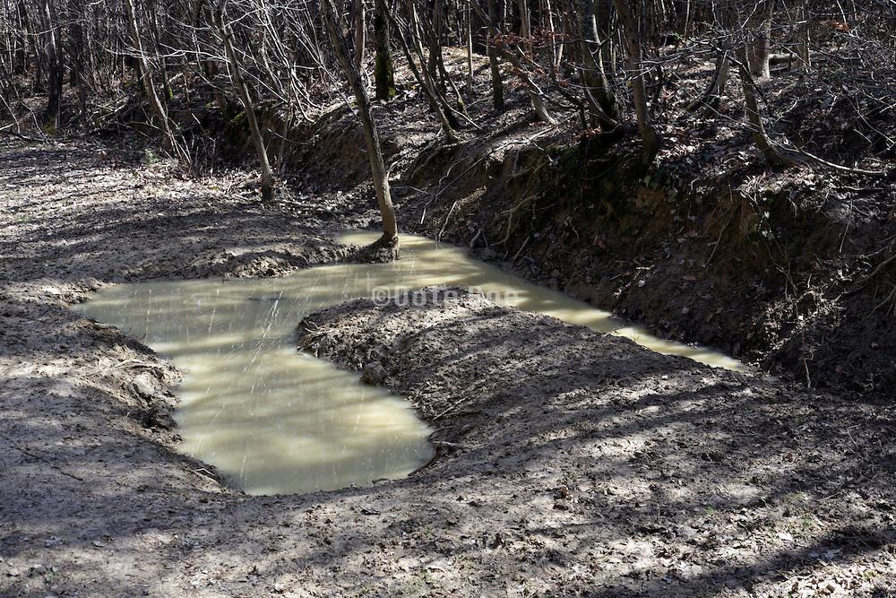 a wild boar mud pool