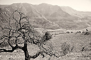 Tree in landscape, Drakensberg Mountains, South Africa.   (monochrome)