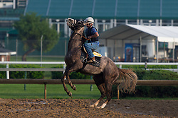 Horses worked the track before the Derby 142 hopefuls were on the track for training, Sunday, May 01, 2016 at Churchill Downs in Louisville.