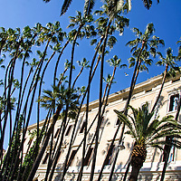 Palmeras en el Ayuntamiento de Málaga, Andalucia. España. Malaga Palms at Town Hall. Andalusia. Spain