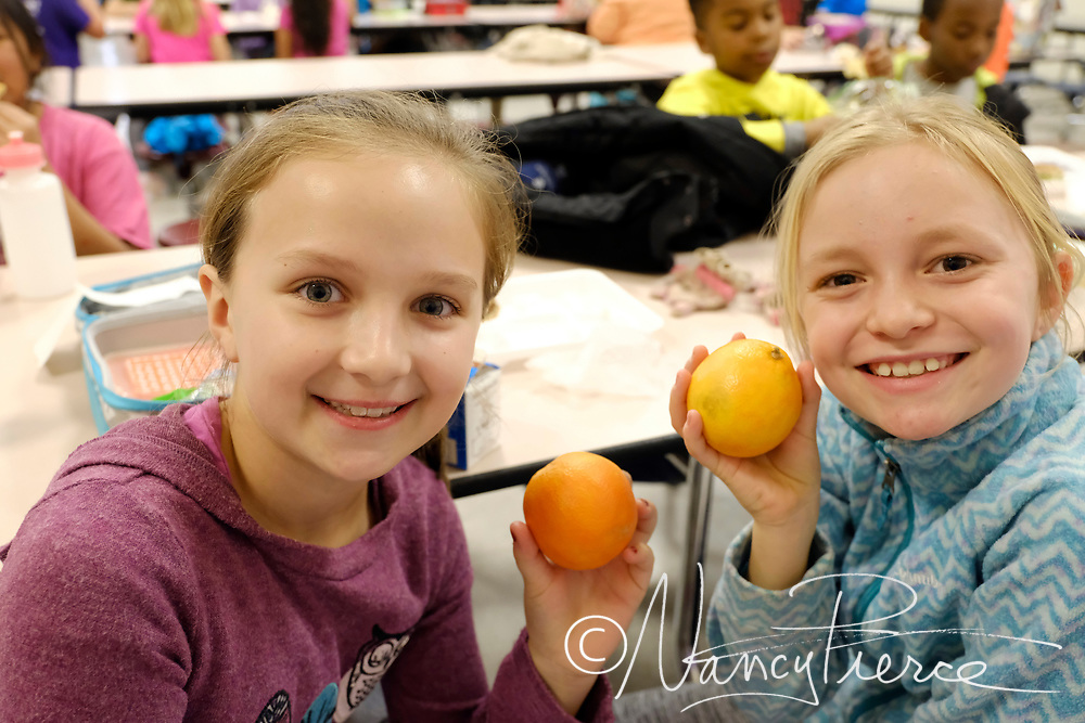 Child Nutrition - Dolphin Cove Cafe at Smithfield Elementary -  Healthy food choices