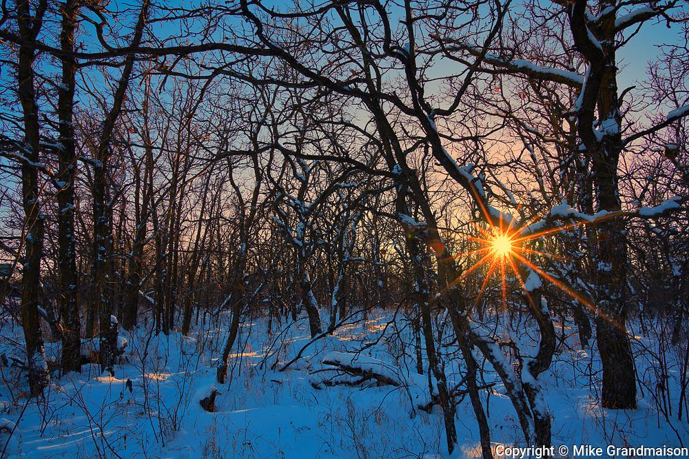 Sunset in bur oak forest<br />Birds Hill Provincial Park<br />Manitoba<br />Canada