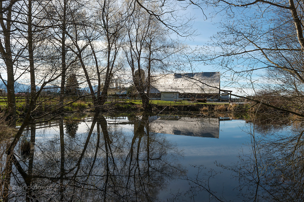 A small farm's old barn is reflected in the pond on a nice spring day, along the Dungeness River in Sequim, WA.