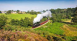 © Licensed to London News Pictures. 11/08/2020. Goathland UK. Locomotive 65894 travels through the village of Goathland along the North Yorkshire Moors Railway on route to Pickering in the sunshine. Photo credit: Andrew McCaren/LNP