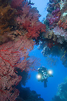 Diving Videographer and Soft Coral Encrusted Swim Through