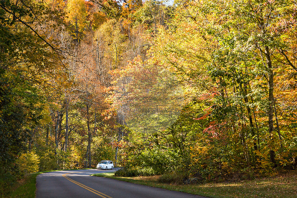 Autumn foliage along the Blue Ridge National Parkway outside Asheville, North Carolina.