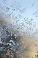 Window frost in morning sun, Maine.