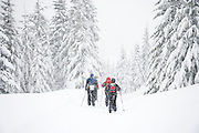 Cross country skiers in a snowstorm along the Mount Tahoma Trails, Ashford, Washington.