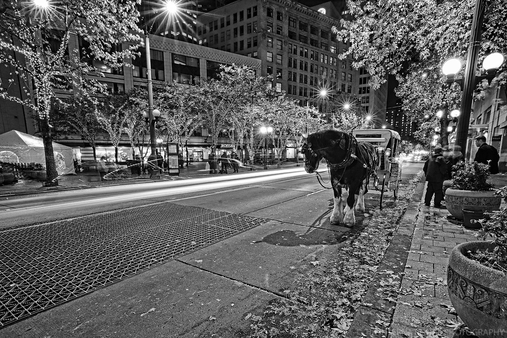 Horse Carriage, Westlake Center, Downtown Seattle