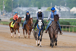 Derby 142 hopeful Creator with Abel Flores up, center, were led to the track by trainer Steve Assmusen for training, Sunday, May 01, 2016 at Churchill Downs in Louisville.