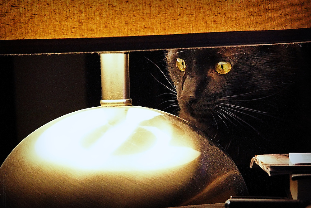 A black cat stalk it's prey under a lampshade.