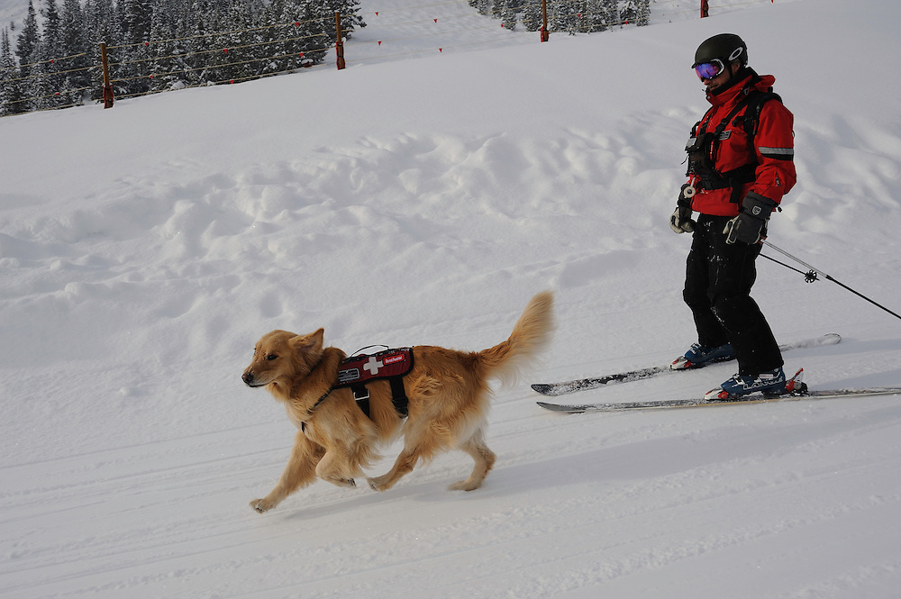 Vail Mountain's Avalanche Rescue Dog, Henry, a Labroador, with  his owner, Vail ski patrol supervisor, Chris 'Mongo' Reeder on the ski slopes of  Vail mountain.