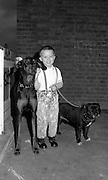 Kid with Dogs, High Wycombe, UK, 1980s.