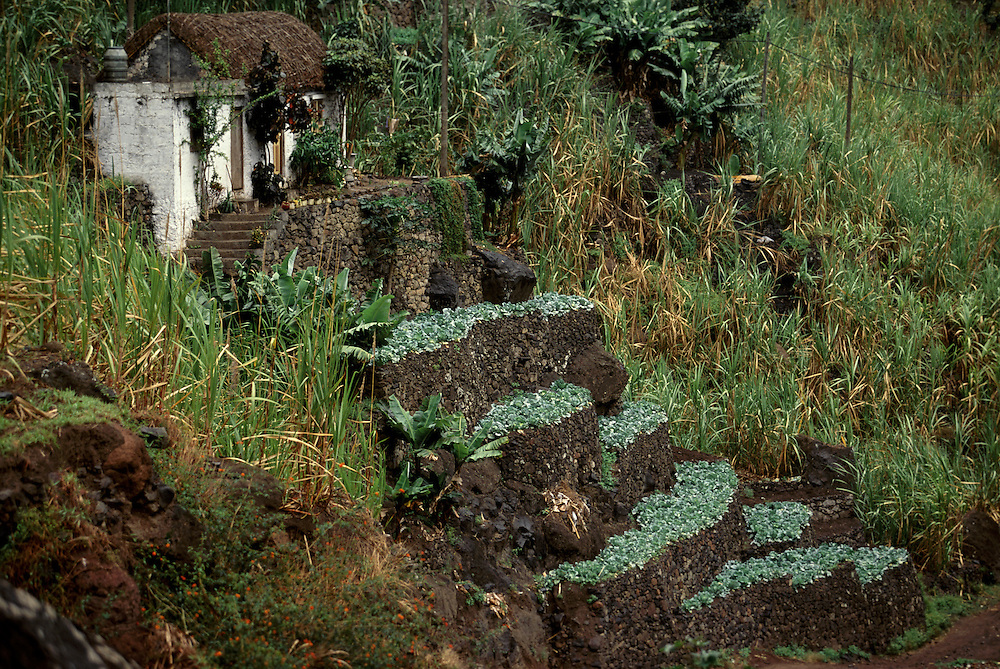 The deep valleys in the northeast zone of Santo Antao island have a microclimate that makes it the only part of the archipelago where it rains regularly and where many vegetables and fruits grow.