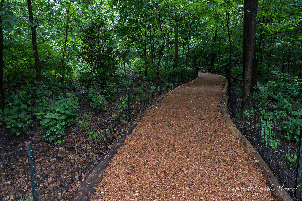 A woodland path throught the North Woods of Central Park