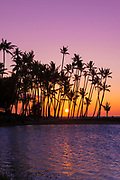 Sunset through silhouetted palms at Anaehoomalu Bay, Kohala Coast, The Big Island, Hawaii USA