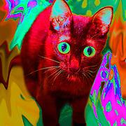 Cat a la LSD (same cat different acid).Cancun, Mexico.