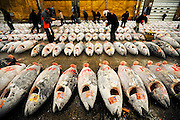 Buyers inspect large tuna lined up for auction at the world's largest fish and marine products market in Tsukiji, Tokyo