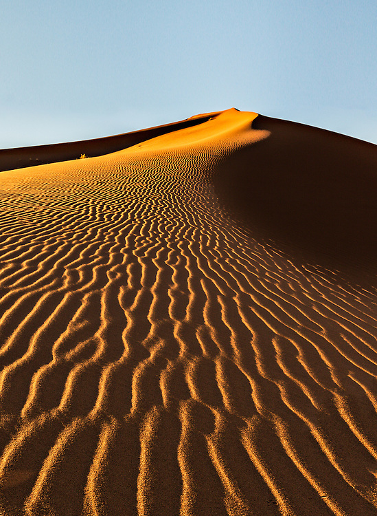 First light on the Sossuvlei dunes turns the ridges into rivers of gold.