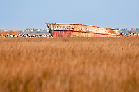 """An old fishing boat wreck named, """"Bald Eagle""""in Wanchese North Carolina."""