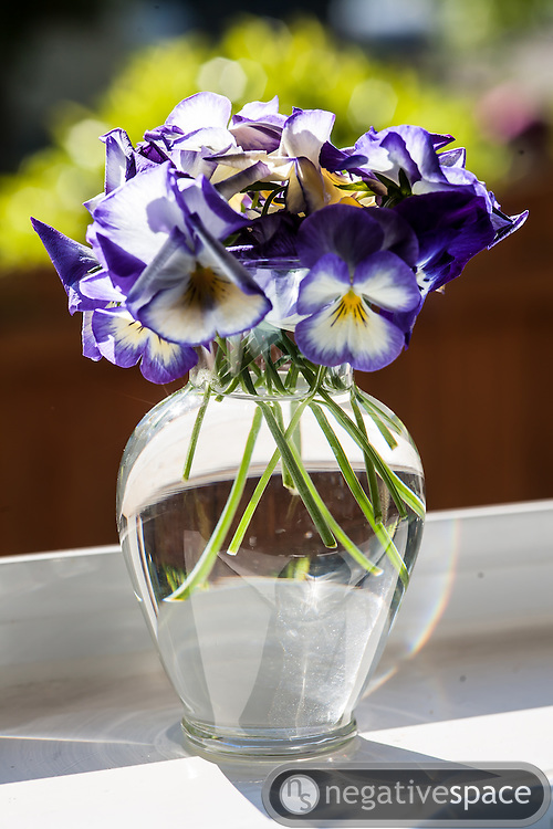 Purple pansies in a glass vase on a kitchen windowsill over a garden, Arlington, Virginia