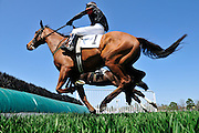 27 March 2010 : Eventual runner up, Richard Boucher and Class Deputy (#1) dual with Carl Rafter and Virginia Minstrel in the Camden Plate Maiden Hurdle race. Rafter and Virginia Minstel won the race by a nose.