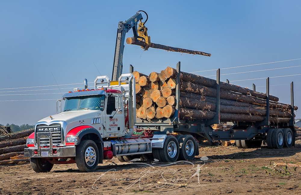 A Mack Granite is loaded with loblolly pine at Tracy's Logging, Nov. 16, 2016, in Steadham, S.C. The timber will go to a Georgia-Pacific plant. (Photo by Carmen K. Sisson)