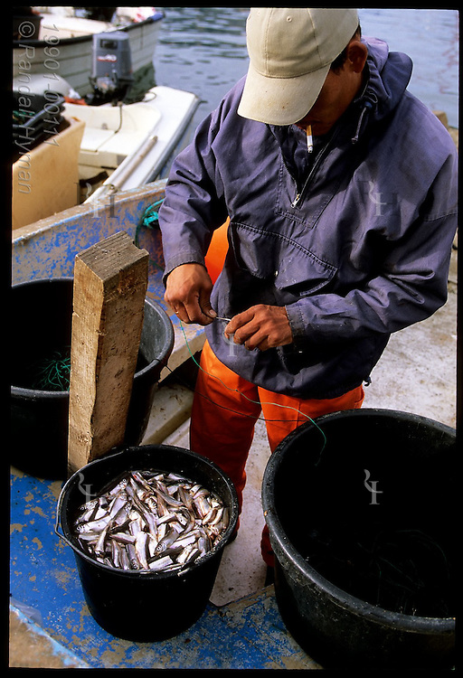 Fisherman hooks herring onto long line for fishing larger species such as cod; Ilulissat, Greenland.