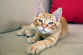 Cats who have been adopted