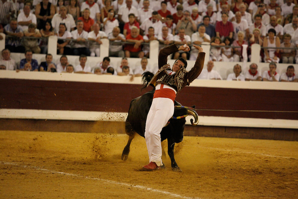 Course landaise at the Feria du Dax. Cows are dodged and leaped over, but not harmed.