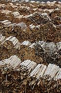 12/01/06 - NEUSSARGUES - CANTAL - FRANCE - GBMF. Groupe Bordet Maitres Feux. Entreprise de fabrication de charbon de bois. Aire de stockage et de sechage du bois - Photo Jerome CHABANNE