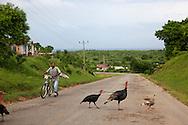 Turkeys in Chorro de Maita, Holguin, Cuba.