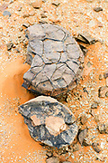 Natural rock fossil found in the Erg Chebbi region of the Moroccan Sahara desert, near Merzouga, Southern Morocco, 2014-04-03. <br />