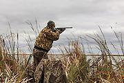 Photo No 10 of series - Hunter kills canvasback drake on open water marsh.