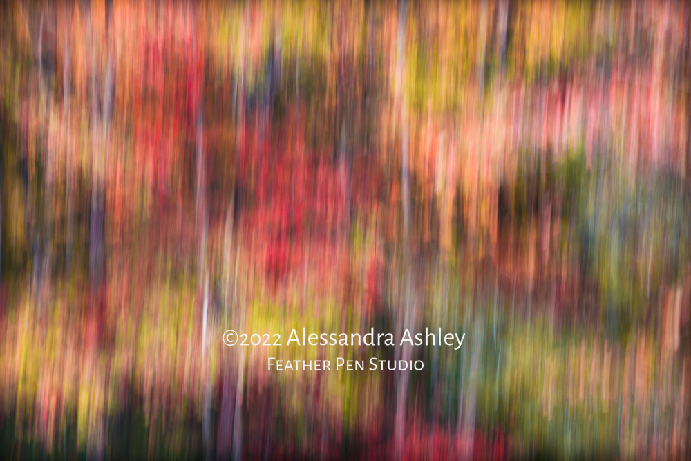 Long exposure tilt of tree trunks and autumn foliage in a tapestry of colors. Great Smoky Mountains National Park near Townsend, Tennessee.
