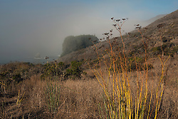 Grasslands along the Pacific Coast, Slide Ranch, Golden Gate National Recreation Area, Muir Beach, California, United States of America