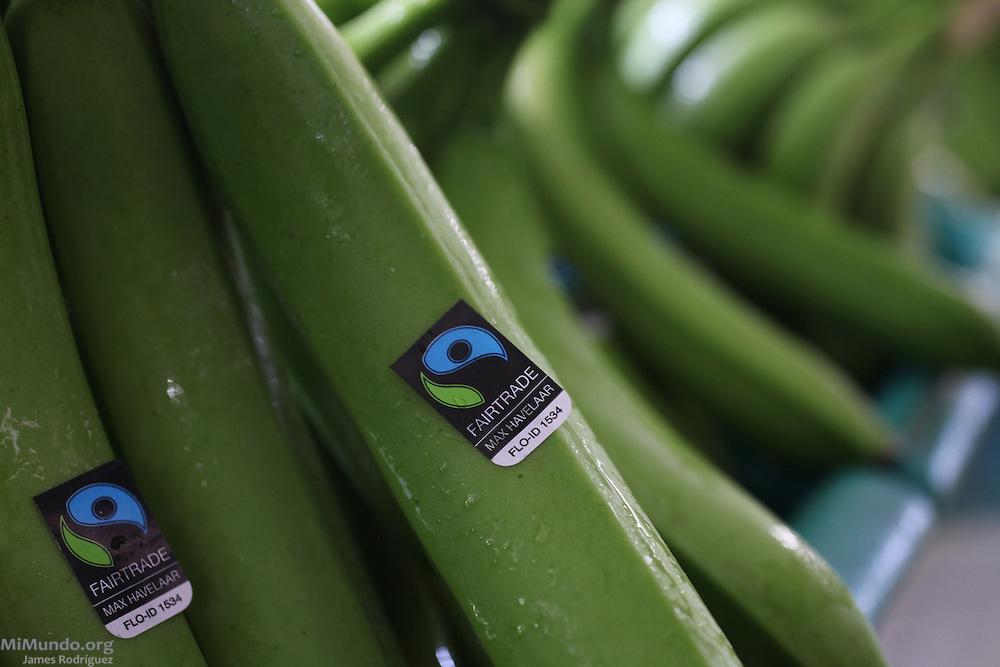 Fairtrade Bananas from COOPETRABASUR. COOPETRABASUR, Corredores, Puntarenas, Costa Rica. August 30, 2012.