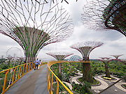 Singapore. Gardens by the Bay, Supertrees.