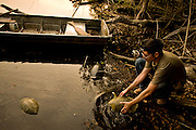 Scientist releasing turtles back into the lake in the Maya Biosphere, Gautemala