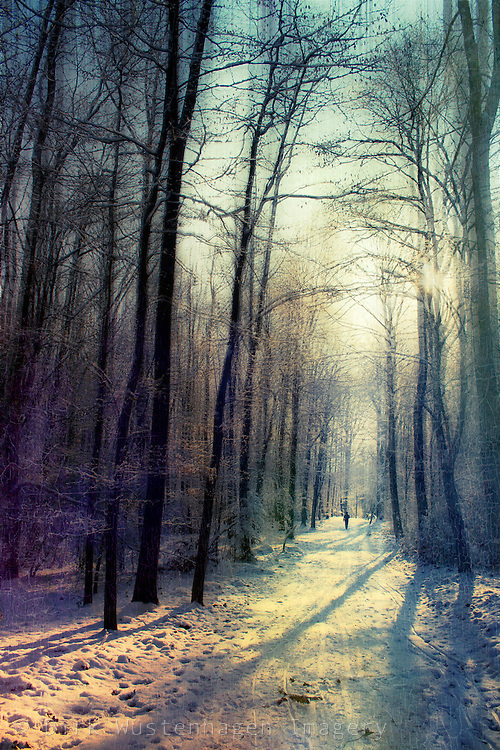 Person walking through colorful winter forest.<br />