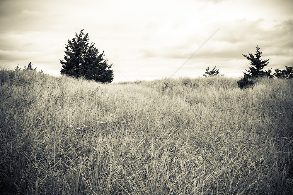 grasslands of the Northwest Woods in East Hampton, NY