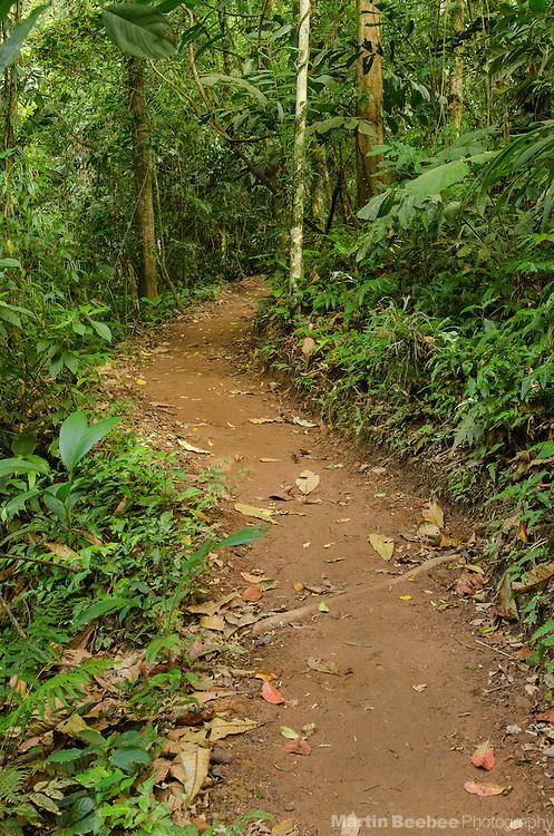 Rainforest hiking trail in the Arenal area near El Castillo, Costa Rica