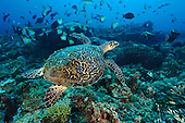 Underwater photos from Kalimantan, Indonesia
