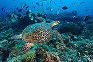 Underwater photos from Kalimantan, Indonesia