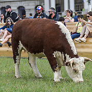Pasture with Cows (Captain Boomer Collective)  Flemish artists collective Captain Boomer, featuring a massive gilt picture frame in the grounds of the Old Royal Naval College on 21 June 2019, London, UK.