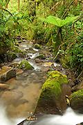 Rain forest stream, International Park la Amistad, Chiriqui province,Panama, Central America
