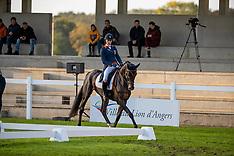 6 year old horses - Mondial du Lion 2019