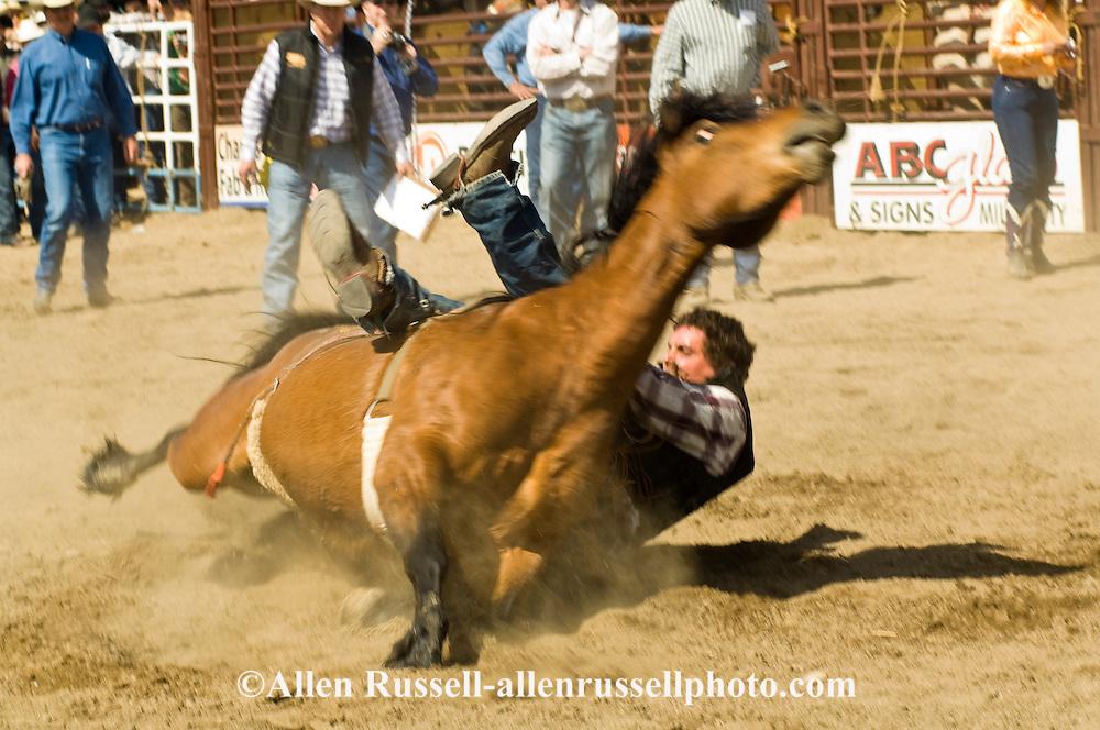 Rodeo Bareback Bronc Flips Miles City Bucking Horse Sale