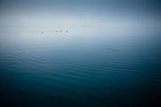 Ducks on Lake Wakatipu